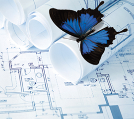 Butterfly and Blueprints
